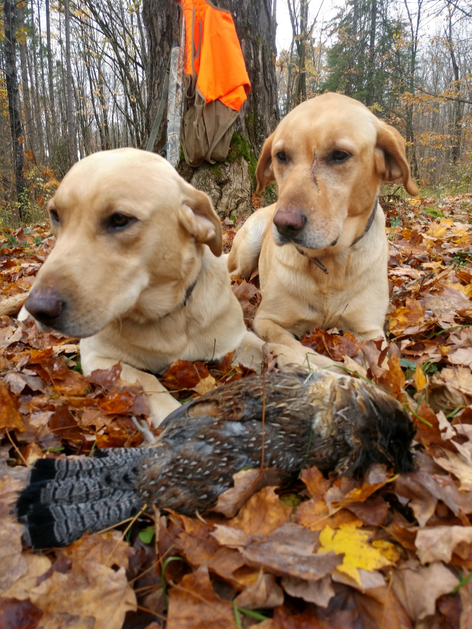 grouse-hunting1